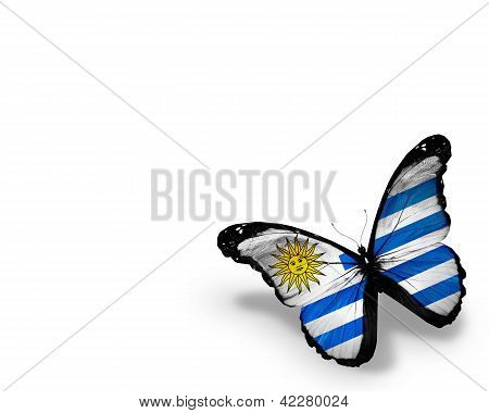Uruguayan Flag Butterfly, Isolated On White Background