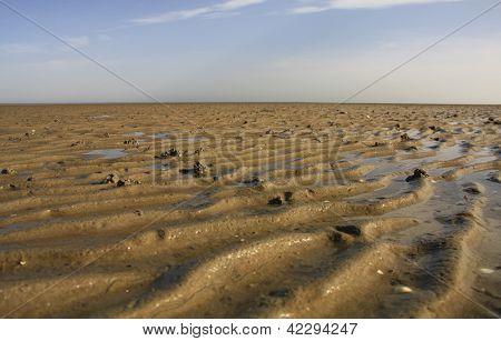 De Noordzee modder met zeepier Heaps