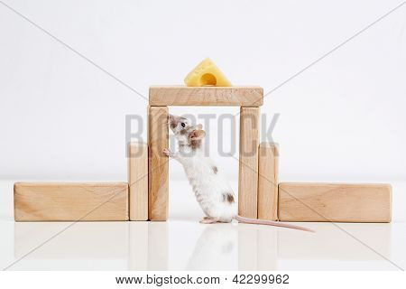 white mouse and house