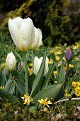 Blooming Flowers-2