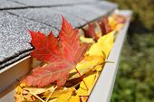 picture of gutter  - A close up of a rain gutter filled with fall leaves - JPG