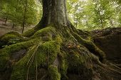 picture of vegetation  - Tree with roots in a green forest - JPG