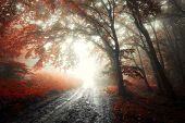 Red forest with fog in autumn with road in strange eerie light