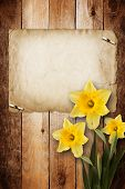 picture of narcissi  - Card for invitation or congratulation with bouquet of flowers narcissus - JPG