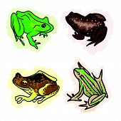 An Illustration Four Different Type Of Frogs