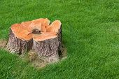 stock photo of dead plant  - stump tree plant on green field use for gardening topic - JPG