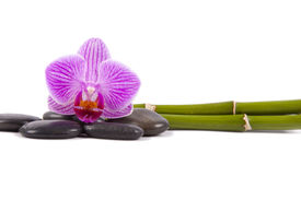 picture of verbs  - purple orchid with black stones and green bamboo trunks isolated on white background - JPG