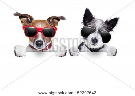 Two Dogs Very Close Together poster