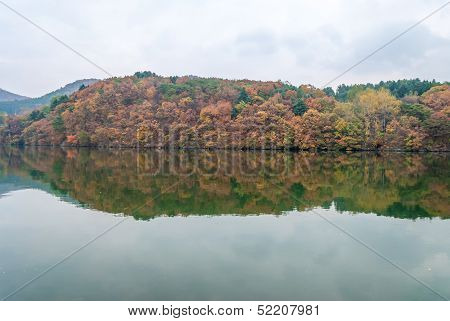 Changing Leaves Over Nami Island