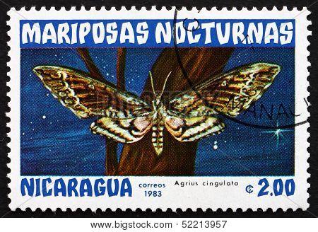 Postage Stamp Nicaragua 1983 Sweetpotato Hornworm, Agrius Cingul