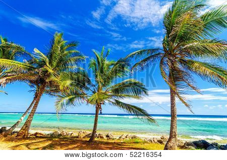 Coastal Palm Trees