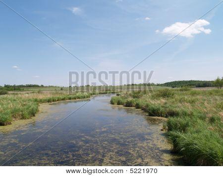 Wetland II