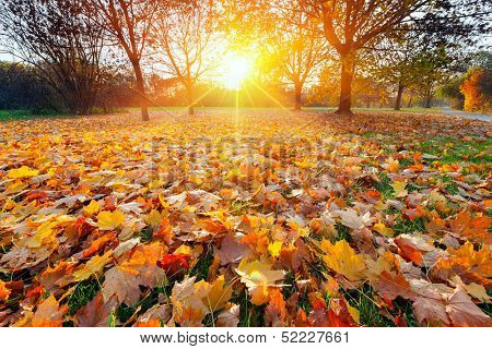 Close-up of sunny autumn foliage