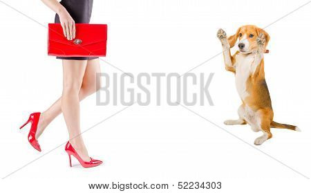 Dog admire the beauty of female legs