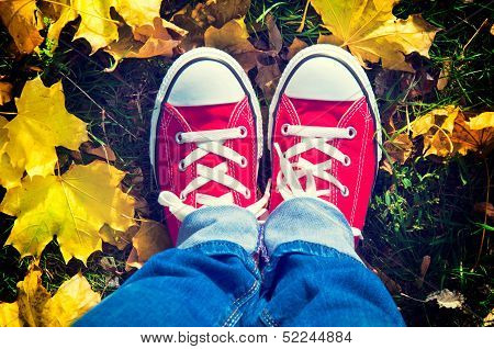 Shoes In Yellow Leafs