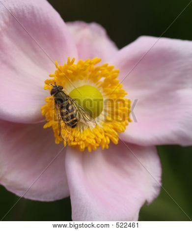 Pollinization