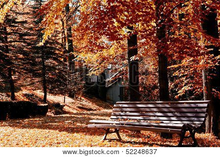 Bench stands in a sunny autumn park