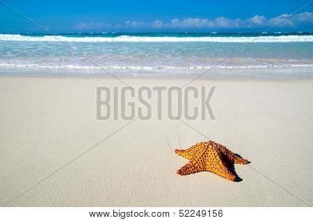 Caribbean starfish over sand beach