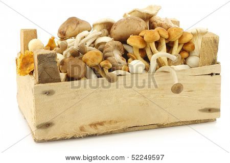 mixed freshly harvested mushrooms in a wooden crate on a white background