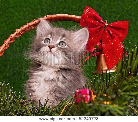 Cute gray kitten with Christmas fir tree
