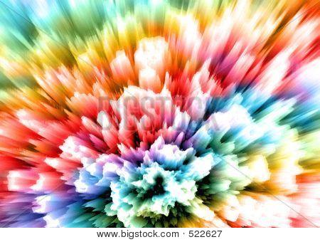 Carnation - Rainbow
