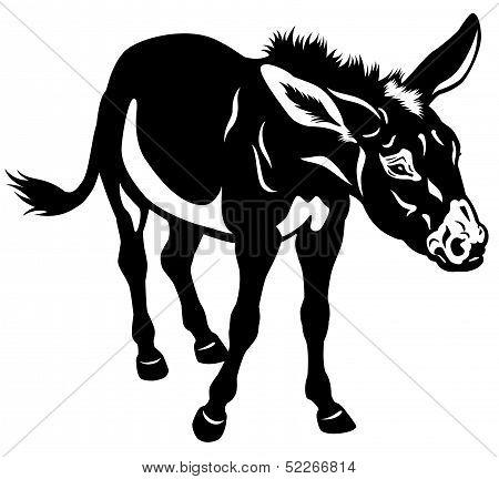 Donkey Black White