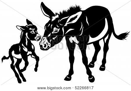 Donkey Mother With Baby