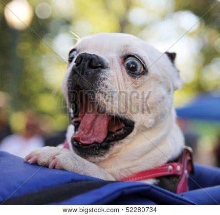 a cute dog at a local park