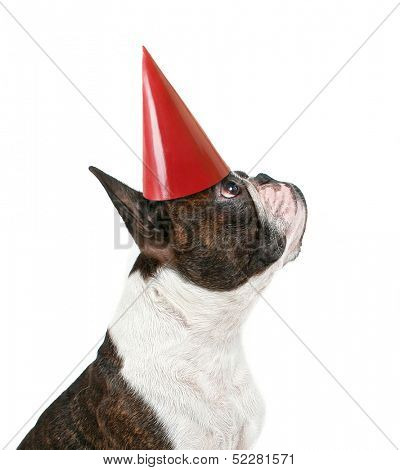 a boston terrier with a party hat on