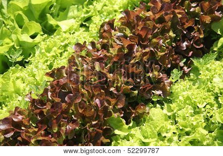 Salad On A Bed