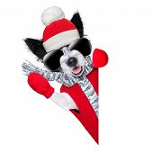 stock photo of pullovers  - winter christmas dog with red gloves and pullover behind blank banner - JPG