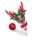 picture of puppy christmas  - reindeer dog behind a blank banner with a christmas ball - JPG