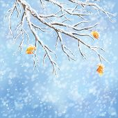 image of frozen  - Winter background with snow - JPG