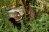 Vintage Pickup Truck Sits In Woods Of Auto Junkyard