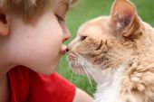 stock photo of happy kids  - a young boy lovingly kisses his cat - JPG
