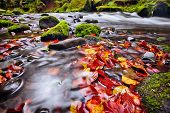 picture of bohemian  - river Kamenice in autumn with long exposure - JPG