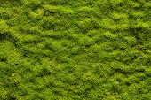 stock photo of marsh grass  - Green moss texture - JPG