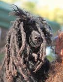 pic of rasta  - a cute dog at a local park - JPG