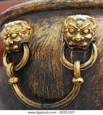 Closeup Lions