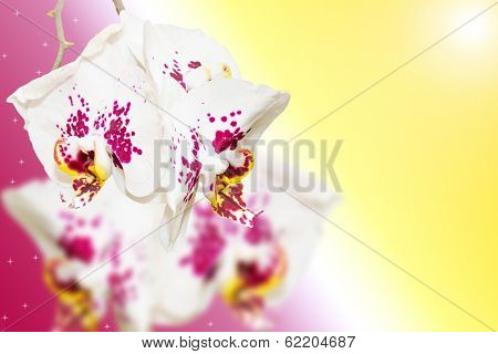 Purple White Spotted Orchid Flowers On Gradient
