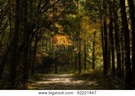 Enchanted Autumn Forest