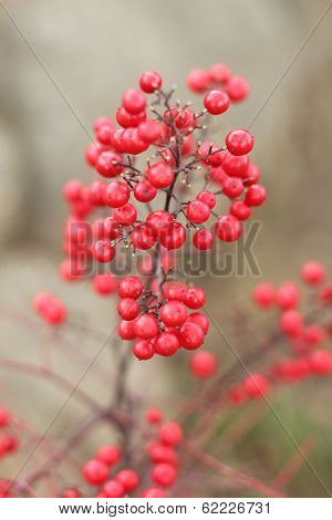 ethereal red bamboo berries