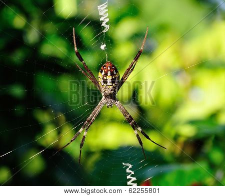 Closeup Spider In Its Web