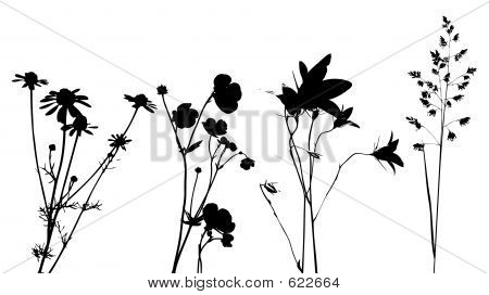 Field Flowers, Herbs And Plants, Vector, Traced