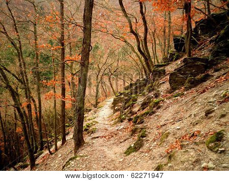 Forest Trail Autumn Germany