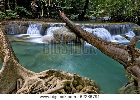 Waterfal And Dry Tree
