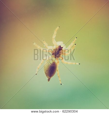 Retro Look Spider Animal