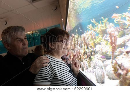 Happy Couple Watching Fishes