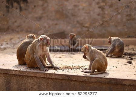 Monkey's Family