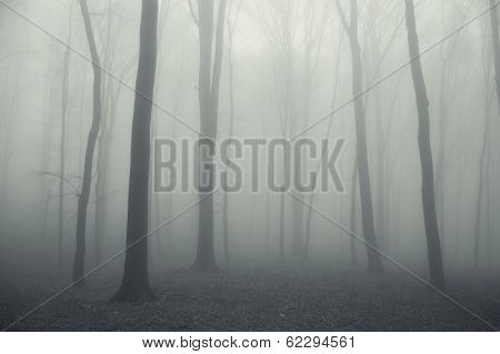 Ehtereal forest with fog trough trees in winter